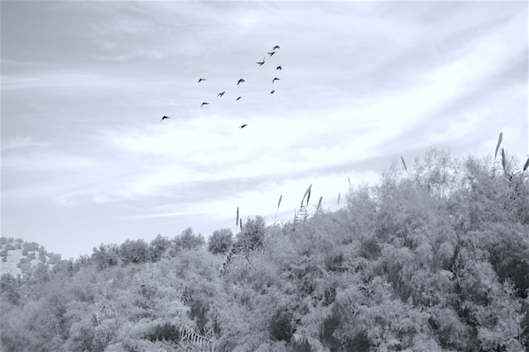 Photo: Birds over Jerash, the ancient Roman city now in northern modern-day Jordan. Credit: Aseel A. Barghuthi